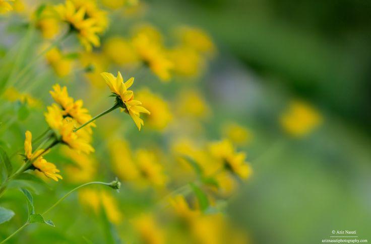 As yellow as charming :) by Aziz Nasuti on 500px