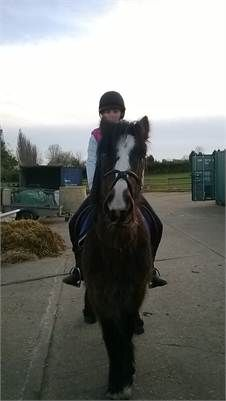 "all round ""teddy"" for sale - cob for sale http://www.equineclassifieds.co.uk/Horse/cob-for-sale-listing-630.aspx#.UzGlAc4TCZY"