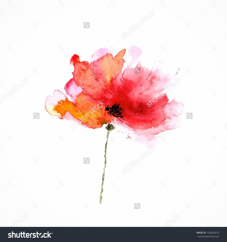 watercolor poppy leaves - Google Search