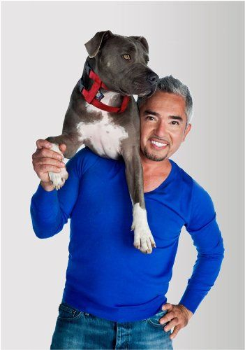 Our Gift Pick for The Pet Lover: Cesar Millan Illusion Collar. Get personalized picks for your friends at http://www.sheknows.com/giftpicks