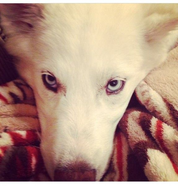 Justice For Luna Please bring our Husky dog killer to justice & end animal cruelty in El Dorado, Arkansas | PetitionHub.org