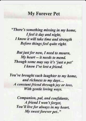 Losing a pet means losing a best friend