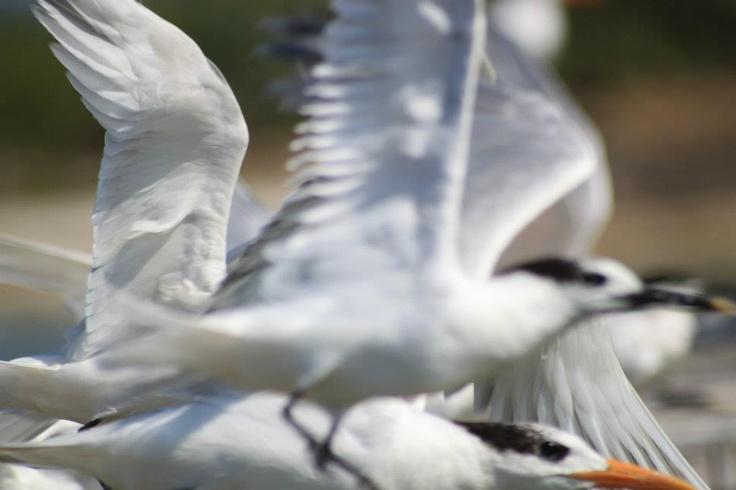 Isla de los Pájaros
