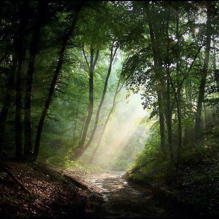 Sunbeam in forest paisajes paradisiacos pinterest for Paisajes para murales de pared