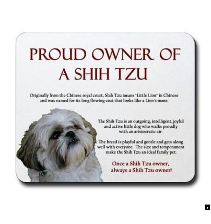 Find Out About Shih Tzu Please Click Here To Read More The Web