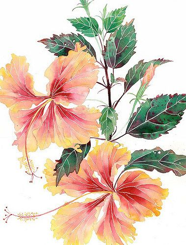 double hibiscus | Watercolour and pencil on Arches paper Sum… | Gabby Malpas | Flickr
