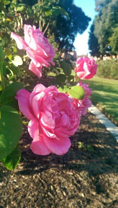 Rose Garden- Exposition Park, Los Angeles