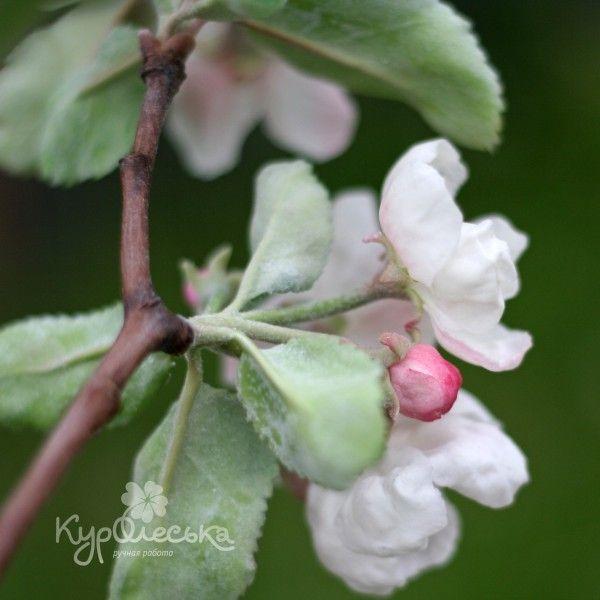 Цветочная феерия Ручная работа - Соцветие яблони из полимерной глины.