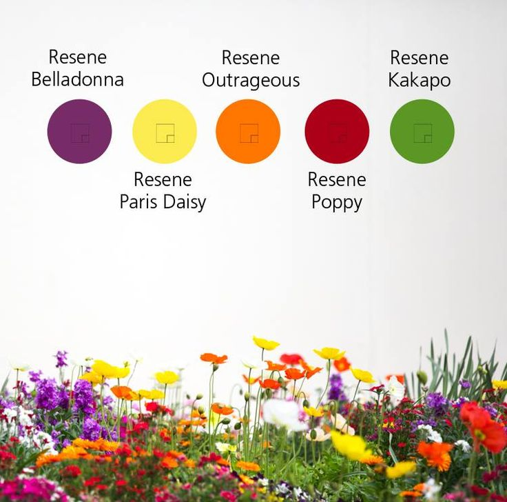 Spring colour inspiration, with Resene paint!