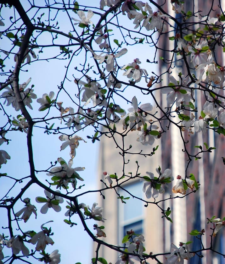 Spring in the City by sandra goroff (c)sgma@aol.com