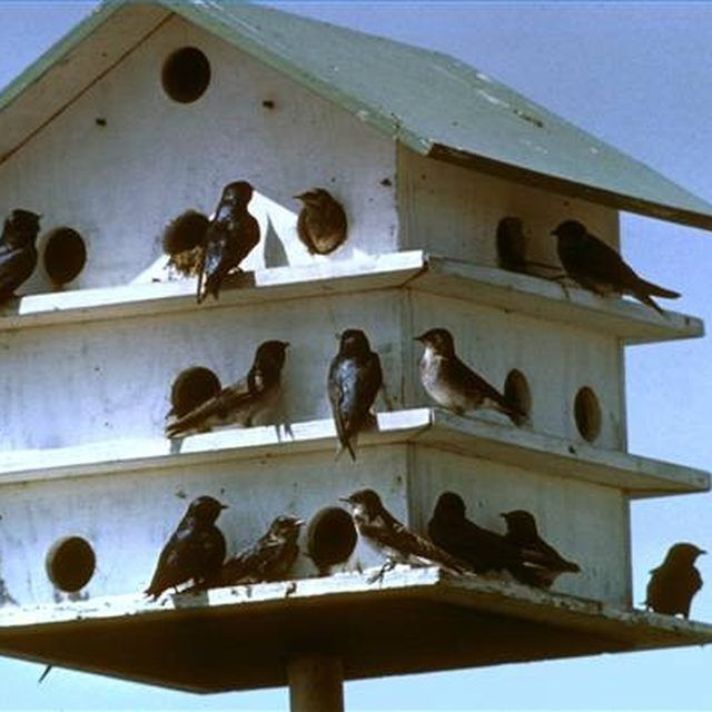 Purple Martin Bird House - Condominium