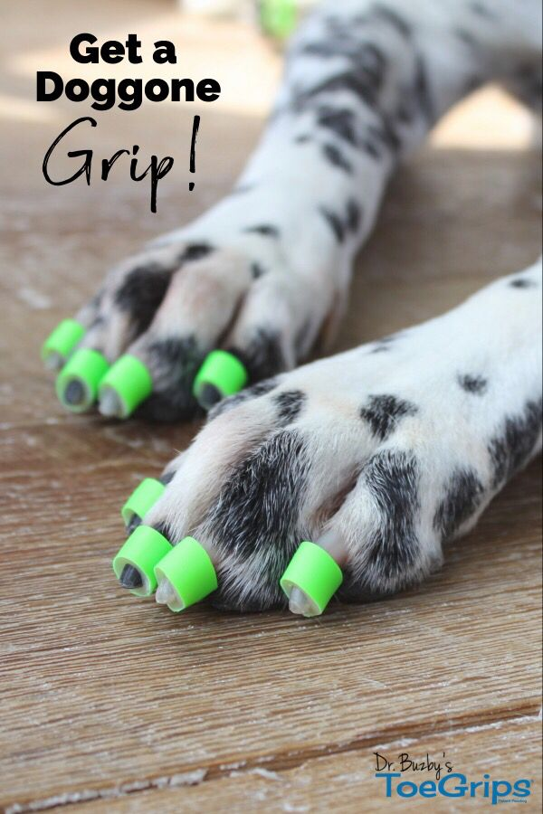 Help Your Arthritic Senior Dog Regain Mobility And Confidence On
