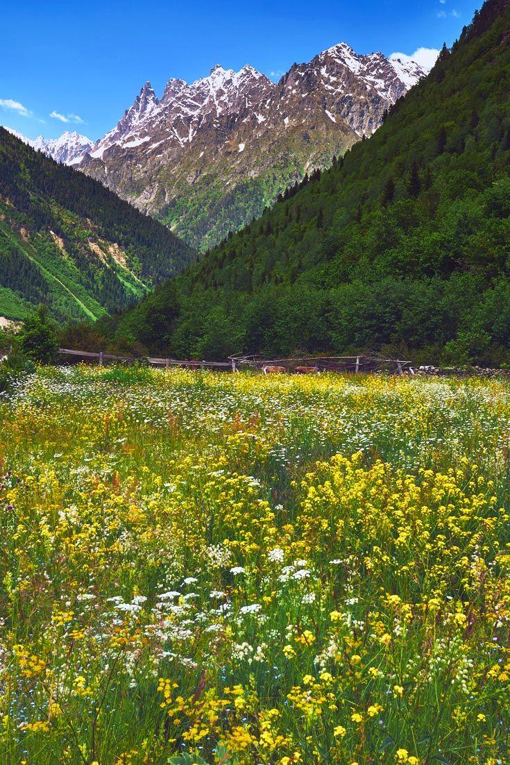 Полевые цветы по дороге в горы. Сванетия. Грузия. #travel #vladimirzhoga #путешествия #сванетия #грузия