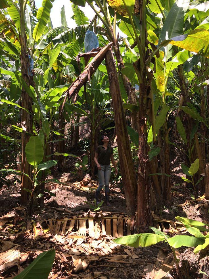 Tlapacoyan in Veracruz-Llave  Banana's worker  Shirt: Ralph Lauren Rugby Jeans: Levi's Cross-body: Leather Coach Messenger Boots: Plastic rain boots