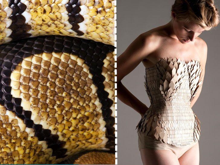 Biomimicry In Fashion To Minimize Waste Stefanie