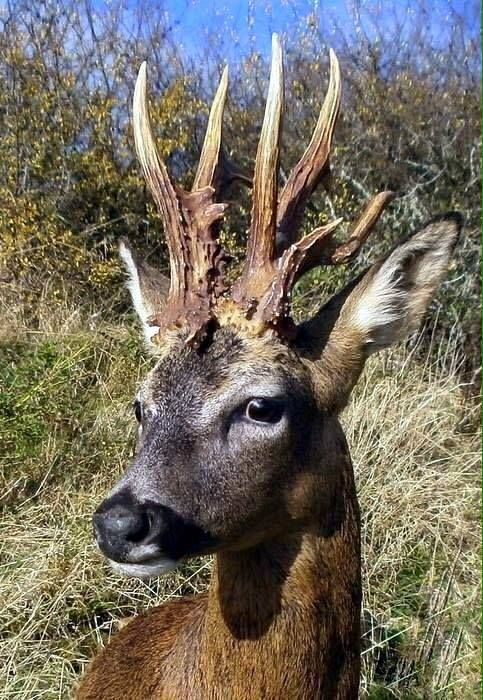 He definitely is a monster buck | Whitetail deer pictures ...