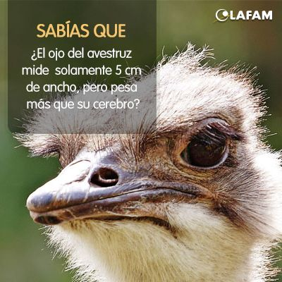 #Avestruz #Ojos