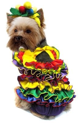 Spanish Girl Halloween Small Dog Costumes. Wish this wasn't so darn expensive.  It would be perfect for Carmen, lol