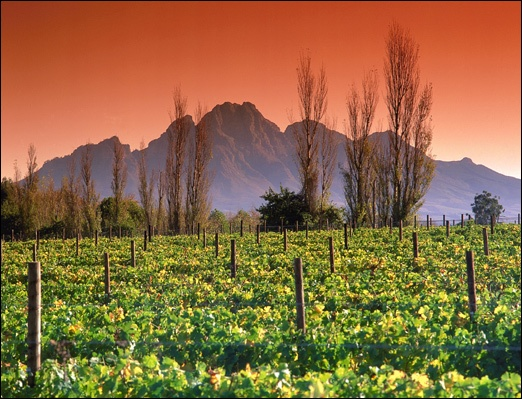 """La Motte Vineyard  Western Cape, South Africa"" When I was in Belgium I was invited to a dinner party and found from a few guests that Cape Town is a popular vacation destination for belgians. They explained it as a breathtaking place with beautiful wines. Have wanted to go ever since. BB"