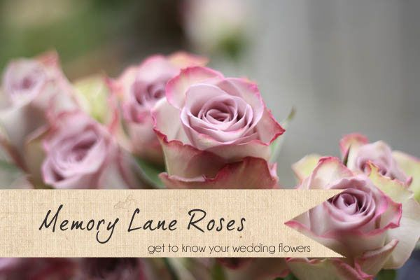 Memory Lane Roses ~ Get To Know Your Wedding Flowers