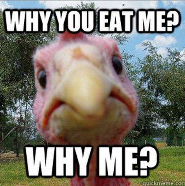 20 Thanksgiving Turkey Memes  Happy Thanksgiving! http://ift.tt/2gksMYL