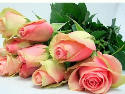 Fresh Flowers and cut Roses by Post online Direct and Delivered UK