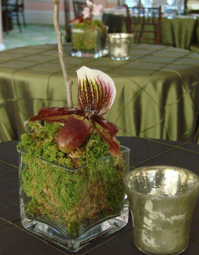 Frühlingsdekorationen Moos Glas Vase Quadrat Orchidee
