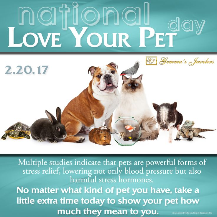 National Love Your Pet Day! Show your pet a little extra