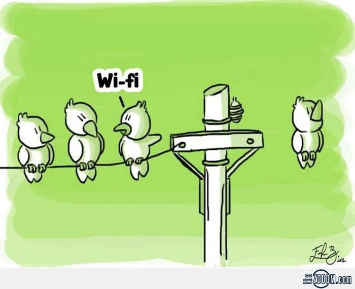Modern Wi-Fi Birds