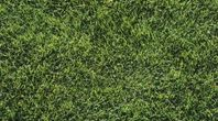 What Types of Grass Seed for Shade in Texas? | eHow