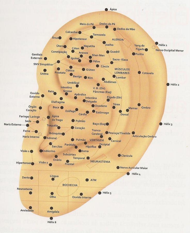 Pontos da Auriculoterapia