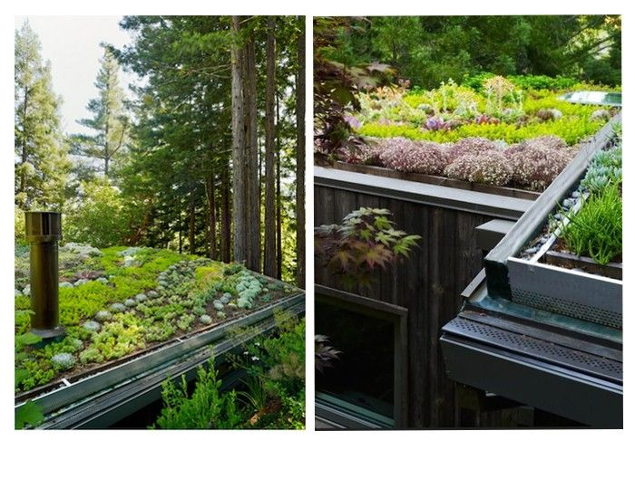 209 Best Green Roof Images On Pinterest | Vertical Gardens, Plants And  Gardening