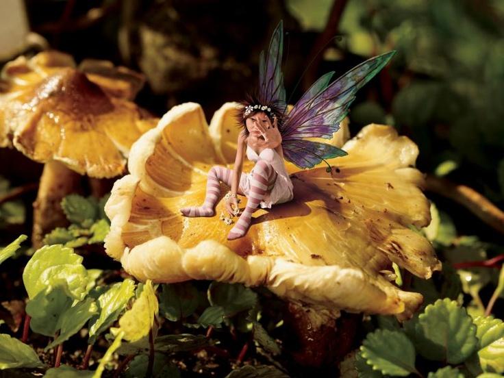 TONYA JOSI 'Fairy' found on ididthatad.com