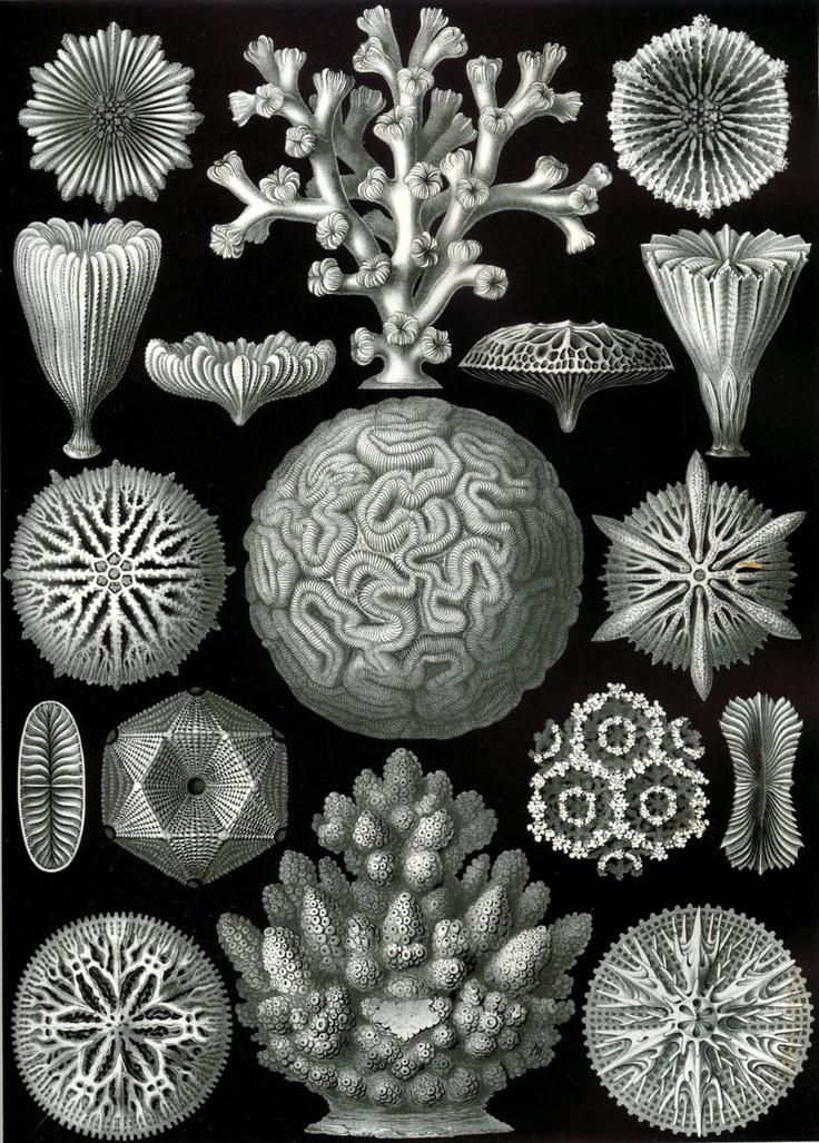 Unus Mundus: Ernst Haeckel