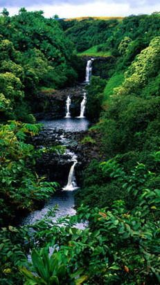 53 best images about The amazing rain forest on Pinterest | South ...