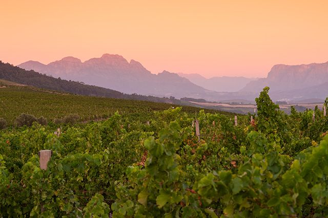 "Jordan Wines GPS: S33° 56′ 33.7"" E 018° 44′ 41.3"" #From N1: • Take the R300/Kuilsriver turn-off from the N1 • Take the M12/Stellenbosch turnoff • Continue past Kuils River and Saxenburg wine farm • After the Vlottenburg cash store turn left onto the Stellenbosch Kloof Road • Continue on this road for 6 kilometres, Jordan is at the end of the road."