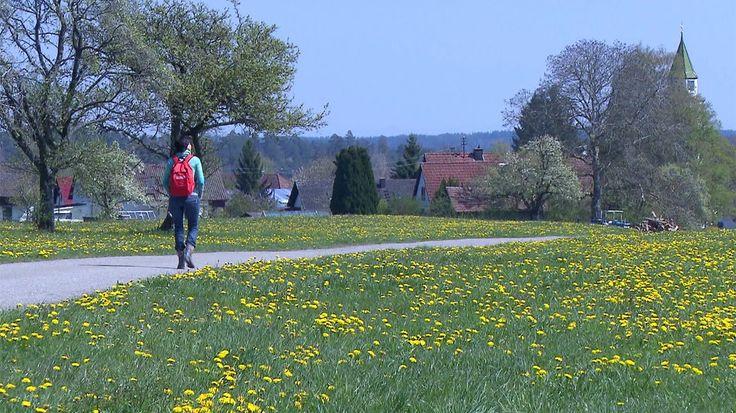 SWR Mediathek - Landesschau Mobil - Aita Koha in Pfalzgrafenweiler