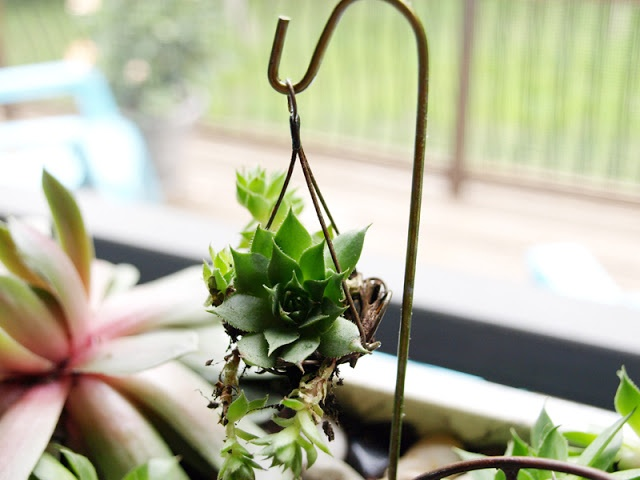 Less Than Perfect Life Of Bliss: Making Mini Shepherdu0027s Hooks For Hanging  Plant