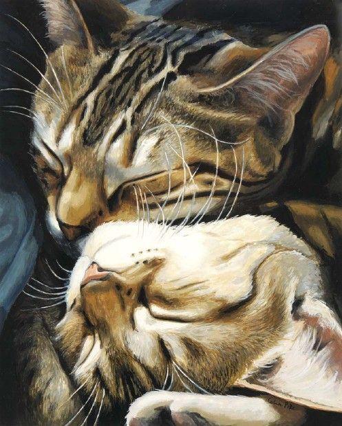 Картинки с котом и кошкой любовь, открытку февраля чтобы