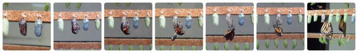 Visita al Mariposario de Benalmádena (con imprimibles) - Visiting Benalmadena Butterfly Park (with printables) • Montessori en Casa
