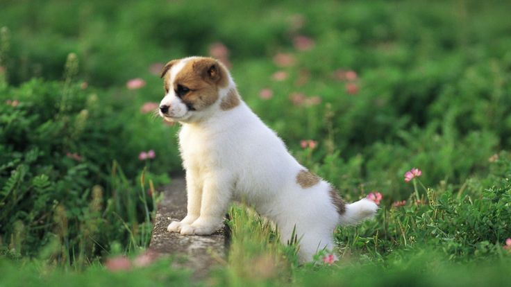 20 of the Most Adorable Puppies with Spots