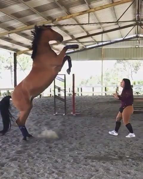 This horse is so powerful! 😍