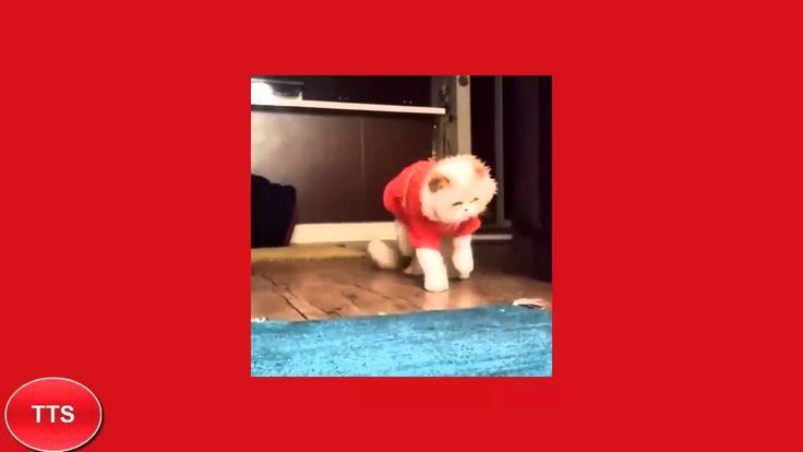 cat dances like michale jackson