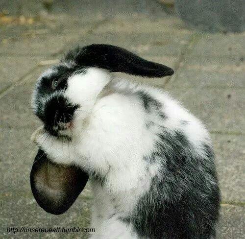 Bunny bath time