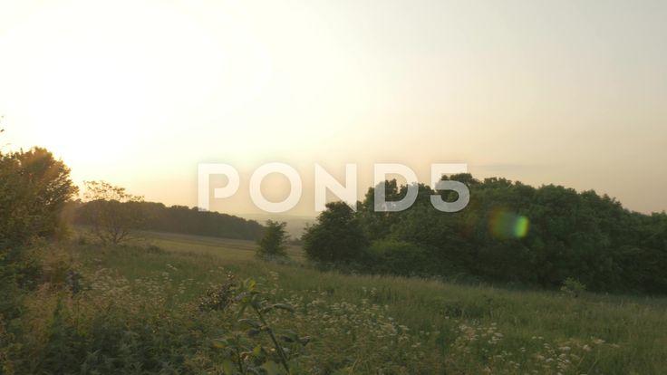 4K Panning Shot Woodland Trees Countryside At Dusk Sunset Lens Flare - Stock Footage | by RyanJonesFilms
