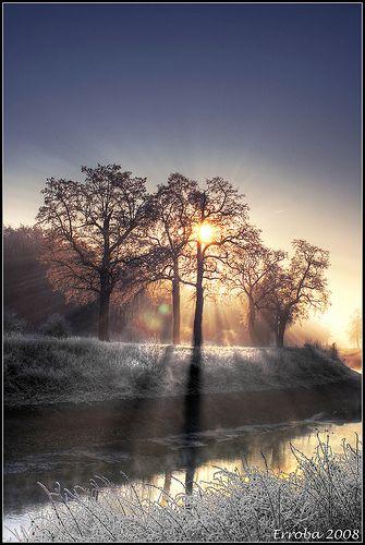 germany / / Sunshine through trees