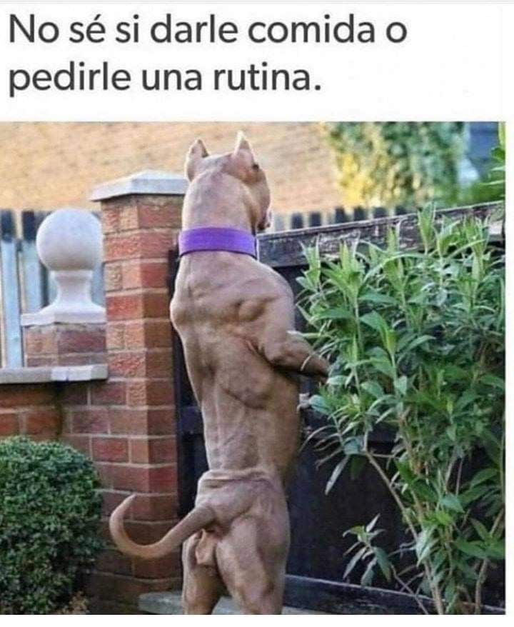 Pin De Cris H Moctezuma En Memes En Espanol Razas De Perros Pitbull Perros Finos Perros Enormes