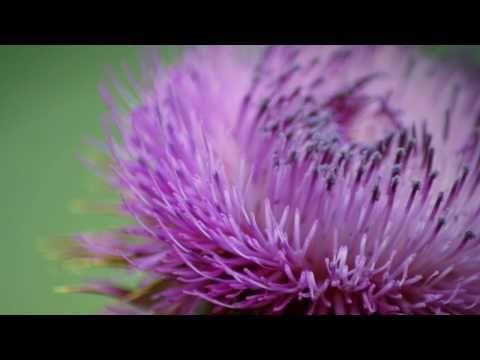 Flora and Fauna...