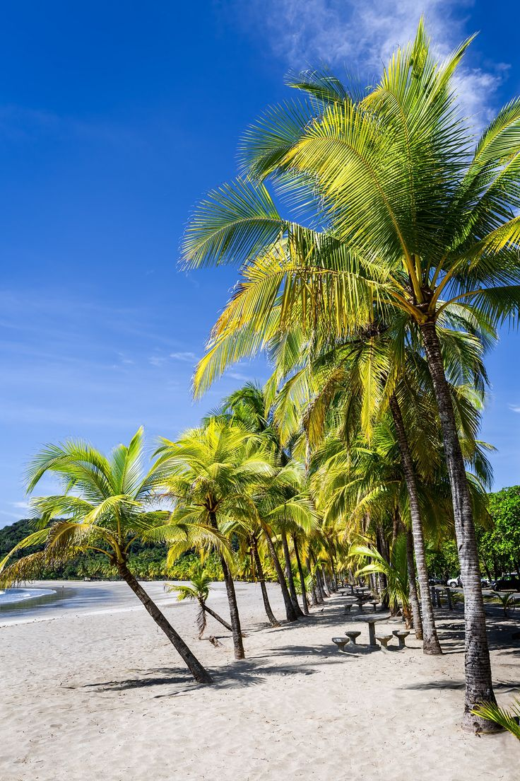 Discover the best of Costa Rica on an 8-day, 7-night tour that blends comfort and adventure in one of the world's most scenic countries.!