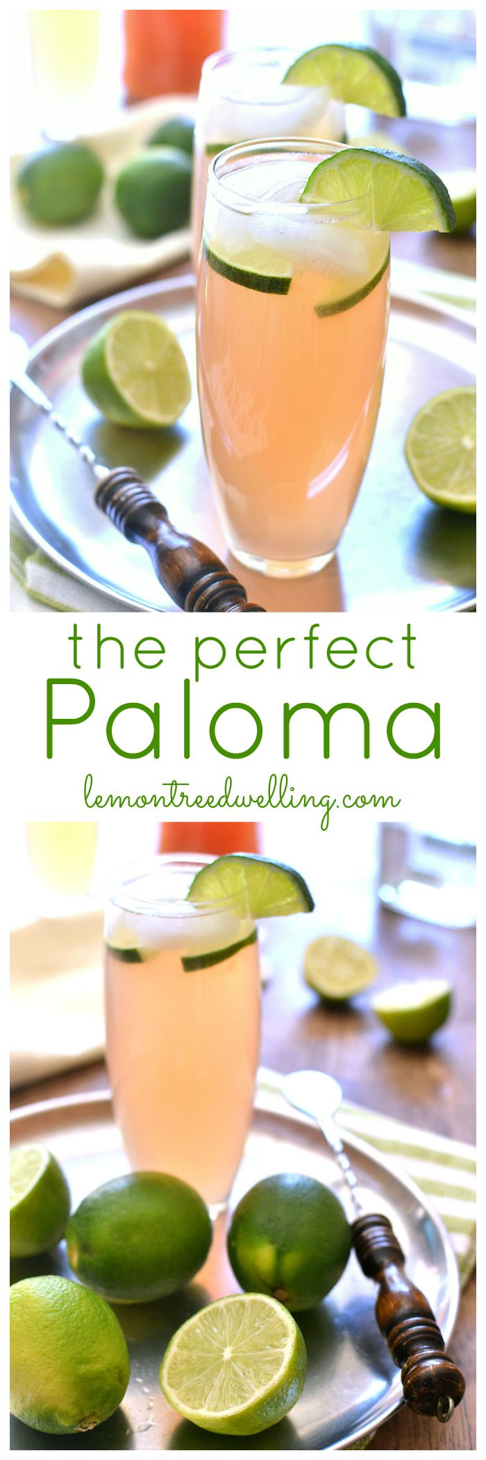 Paloma | Lemon Tree Dwelling
